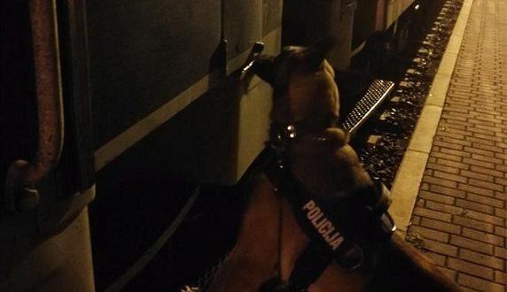 Policijski pas Lord spasio trudnicu