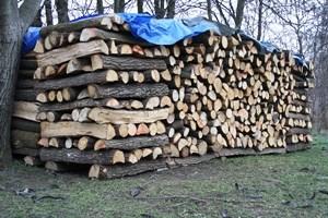 Ukrao drva za ogrijev