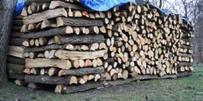 Posjekao i ukrao ogrijevna drva