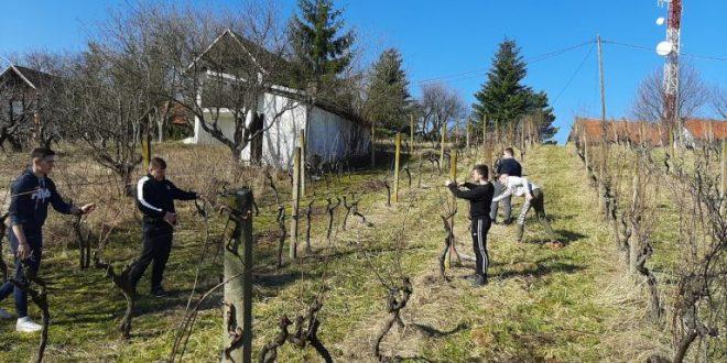 Učenici zanimanja Agrotehničar nastavljaju radove na poljoprivrednom gospodarstvu u Trnavi