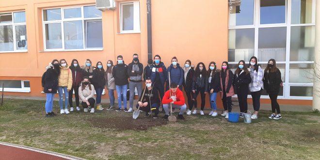 Gimnazija Antuna Gustava Matoša obilježila Dane kolektivne sadnje drveća u Hrvatskoj