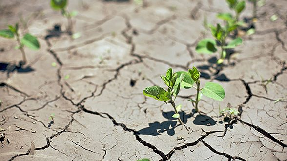 Đakovo: Proglašena prirodna nepogoda suša